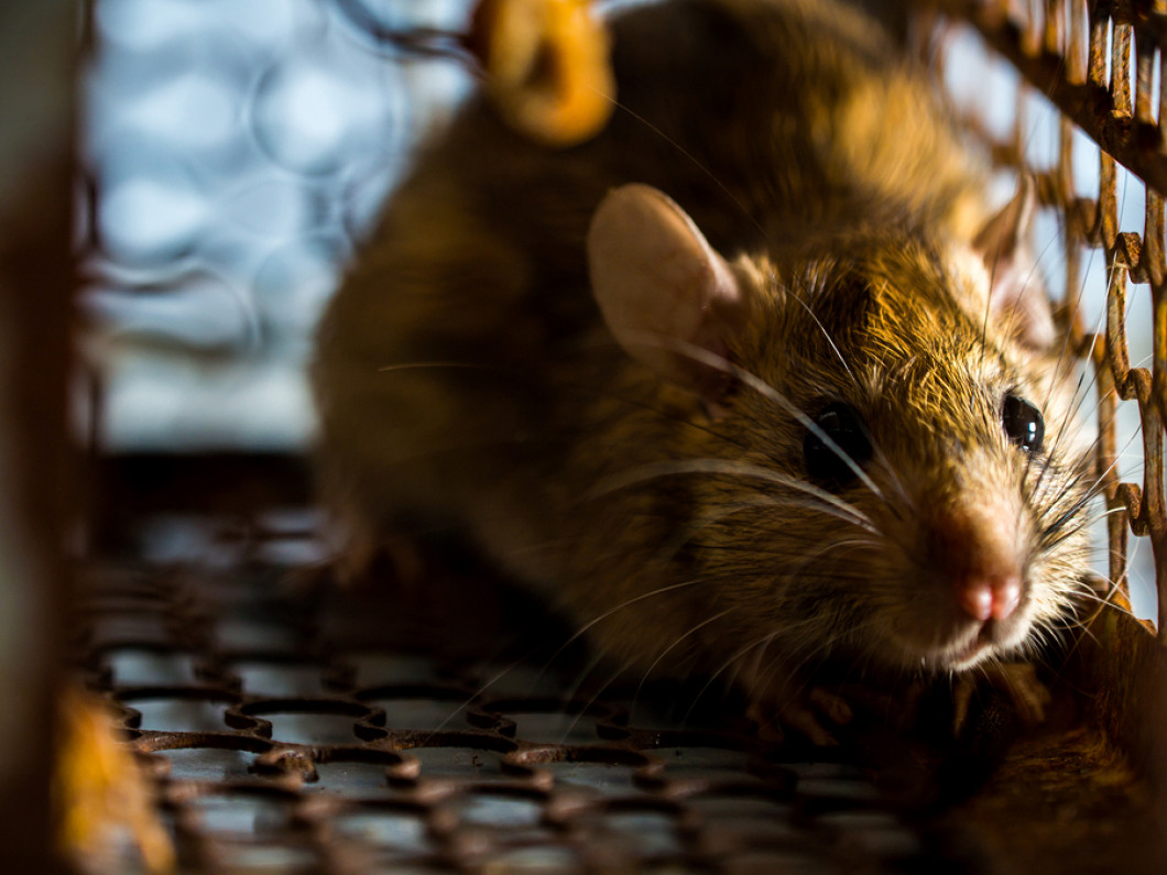 Remove Animals From Your Home the Safe Way