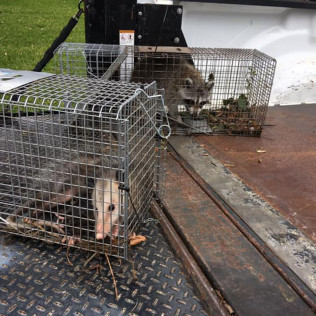wildlife control services chattanooga tn