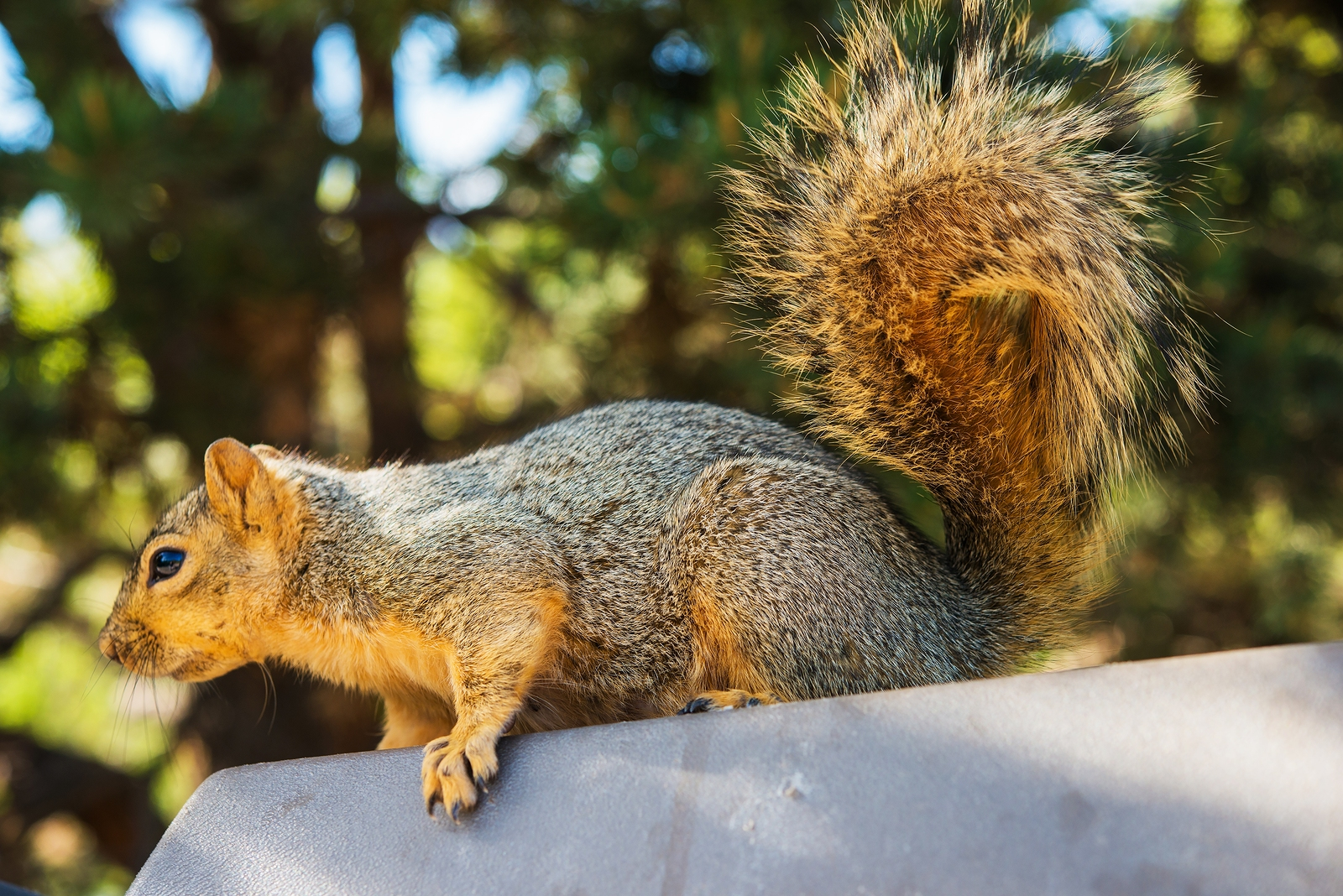 Are You Worried You Have a Squirrel Infestation?